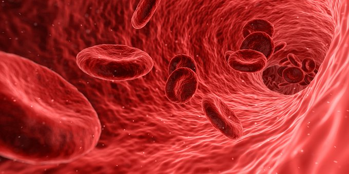 Biology - red blood cells in motion